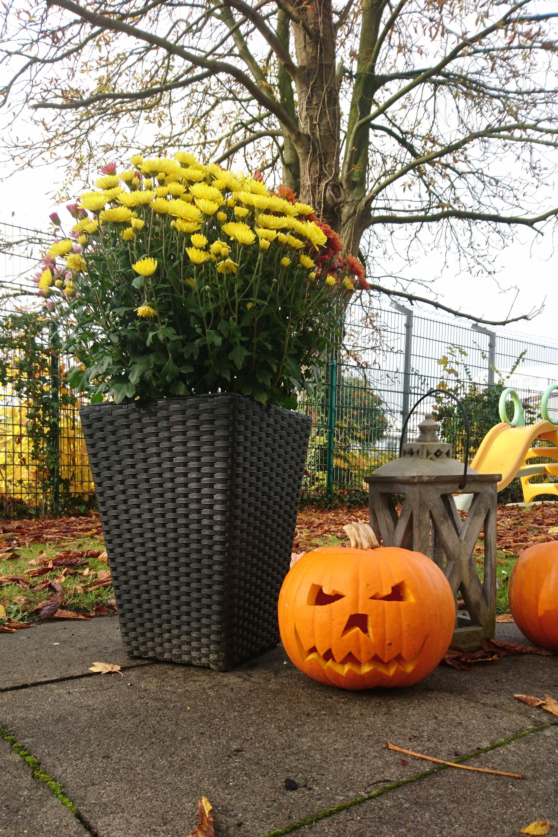 halloween k rbisse schnitzen perspektive jugendhilfe. Black Bedroom Furniture Sets. Home Design Ideas